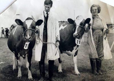 Ayrshire Cows at Kent County Show