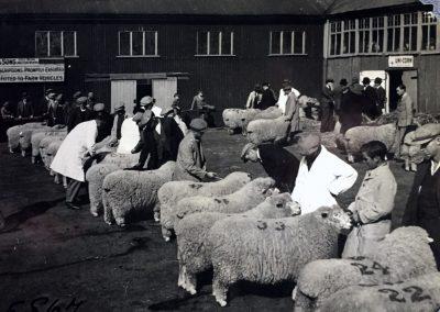 Garandad's Romney Marsh Sheep